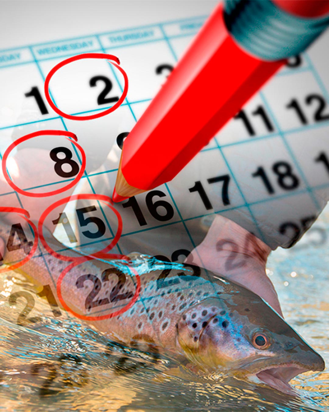 SouthernLoops fly fishing provides tailor made schedules according each group preference.